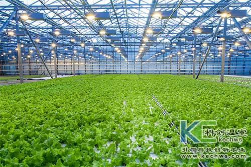 无土栽培,温室