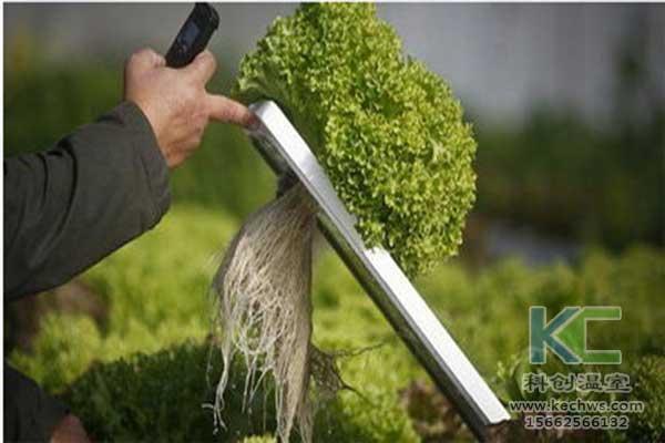 无土栽培,无土栽培技术,无土栽培基质