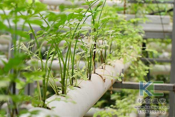 无土栽培技术,无土栽培蔬菜