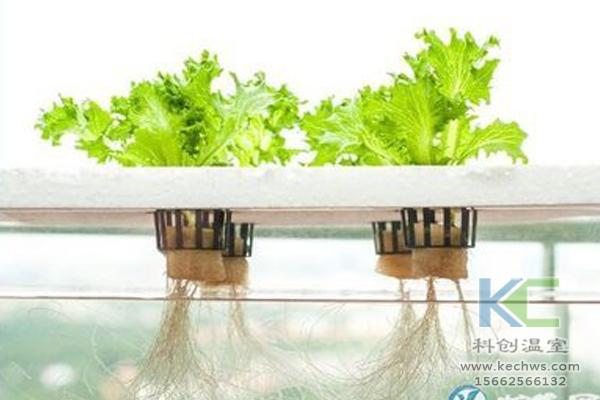有机蔬菜栽培,无土栽培技术,无土栽培,温室大棚