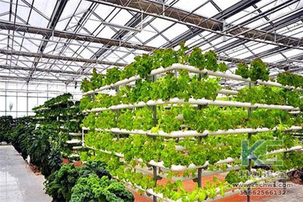 无土栽培,无土栽培技术,温室大棚,无土栽培蔬菜