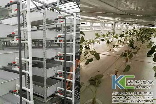 植物工厂,无土栽培