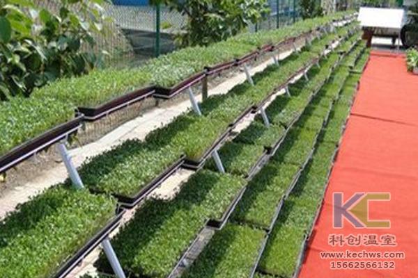 鱼菜共生系统,无土栽培技术,无土栽培,温室大棚