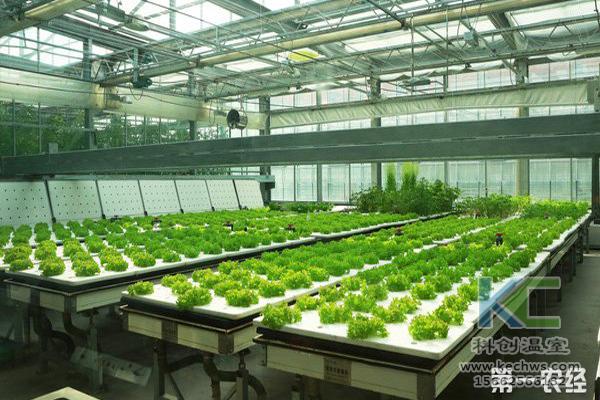 无土栽培,设备,无土栽培设备,设施