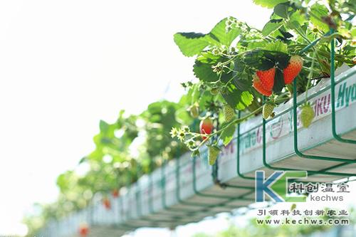无土栽培,无土栽培技术,栽培技术