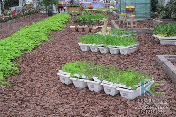 无土栽培技术,鱼菜共生系统,无土栽培,温室大棚