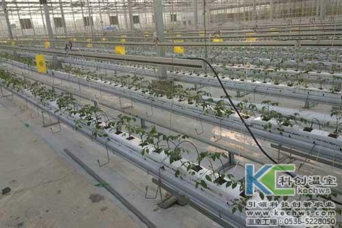 黄瓜,基质栽培,无土栽培