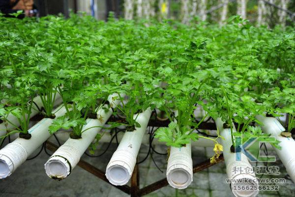 无土栽培,无土栽培技术,温室大棚,蔬菜大棚