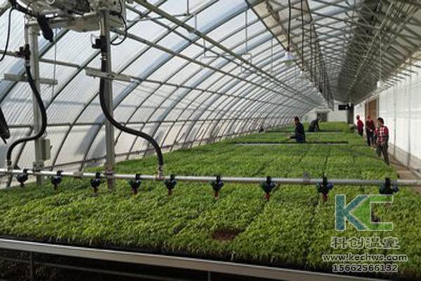 无土栽培技术,休闲农业,无土栽培,温室大棚