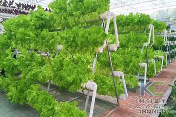 温室大棚建设,无土栽培技术,无土栽培,温室大棚
