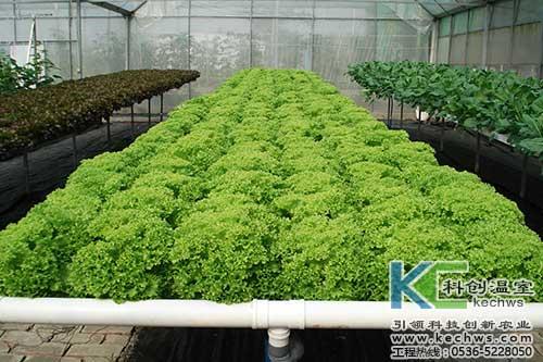 无土栽培,无土栽培技术,无土栽培设备