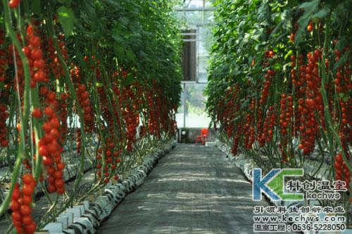 无土栽培,无土栽培技术,无土栽培优势